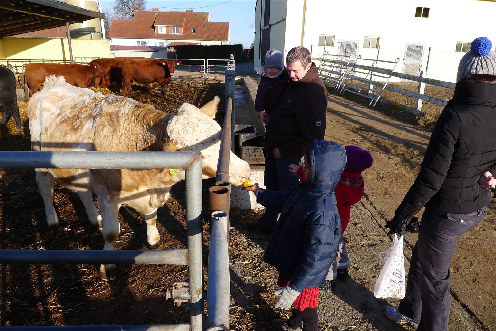1-visiting-uncle-hartmuts-cows