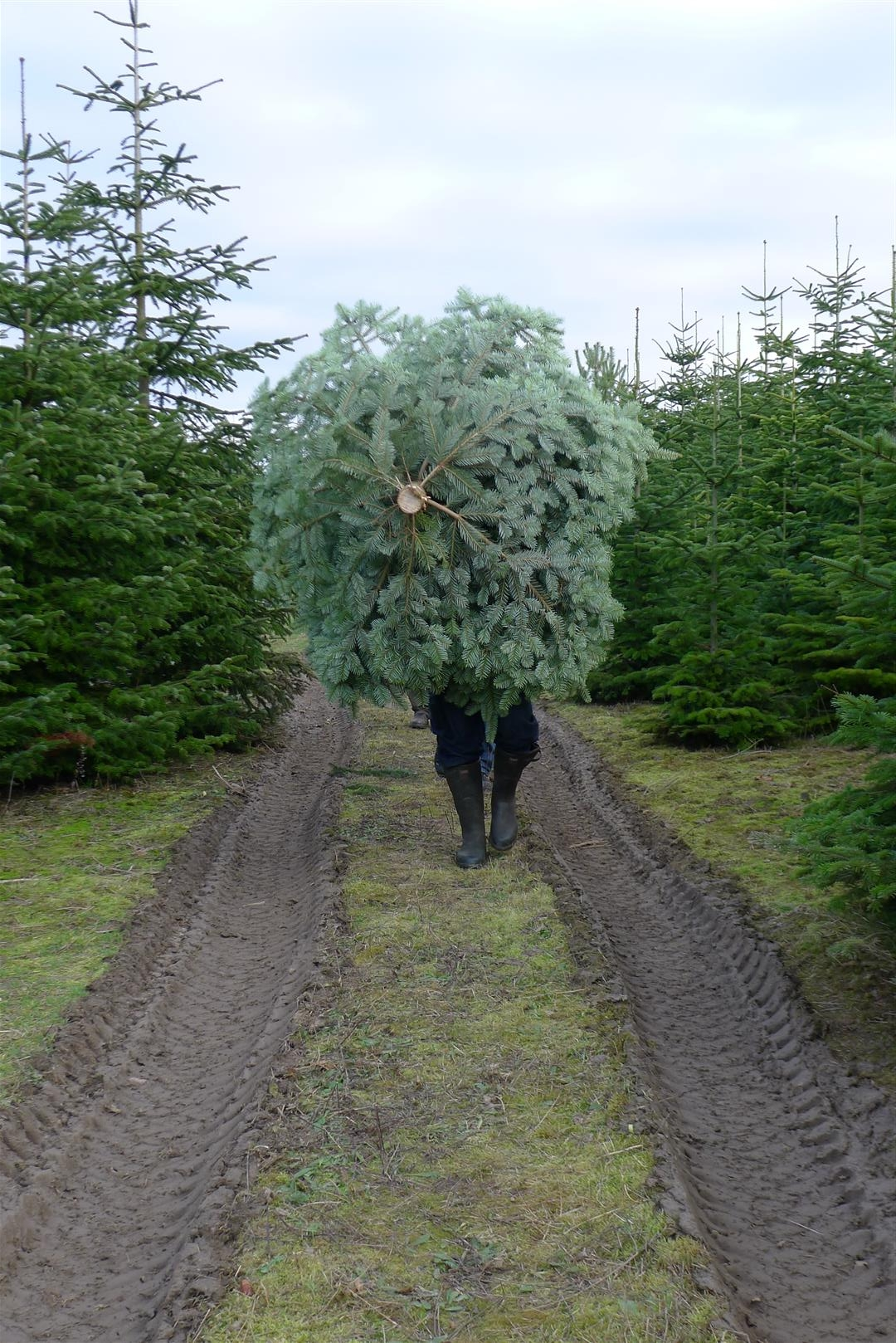 6-schlepping-the-tree
