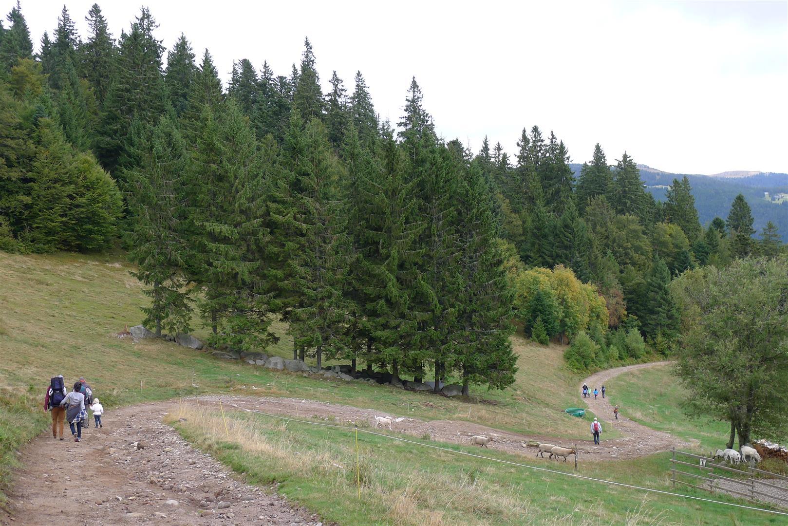 16-hike